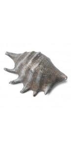 Coquillage gris 12 x 8 cm