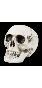 Crâne avec machoîre articulée halloween 17 x 15 cm