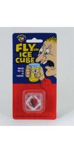 Glaçon avec mouche (CE)