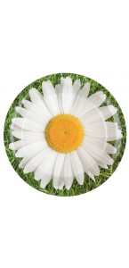 Lot de 10 assiettes en carton marguerite D 22,5 cm