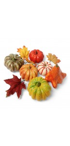 Lot de 6 coloquintes + feuilles assorties