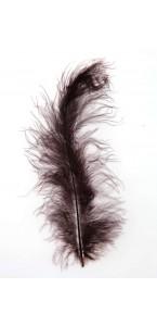 Sachet de plumes chocolat 5g (50 plumes)