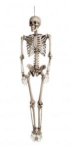 Squelette en plastique halloween de 160 cm