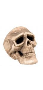 Tête de mort halloween 22x15 cm