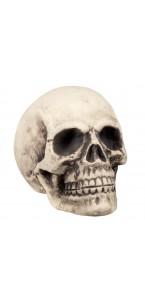 Crâne Supermind 27 x 27 x 38 cm
