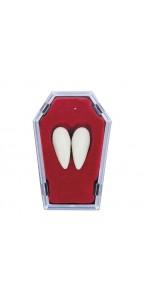 Paire de Canines de vampire dans un cercueil halloween