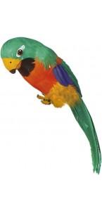 Perroquet multicolore à plumes