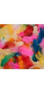 Sachet de plumes multicolores 20 gr