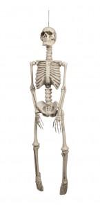 Squelette en plastique halloween de 92 cm